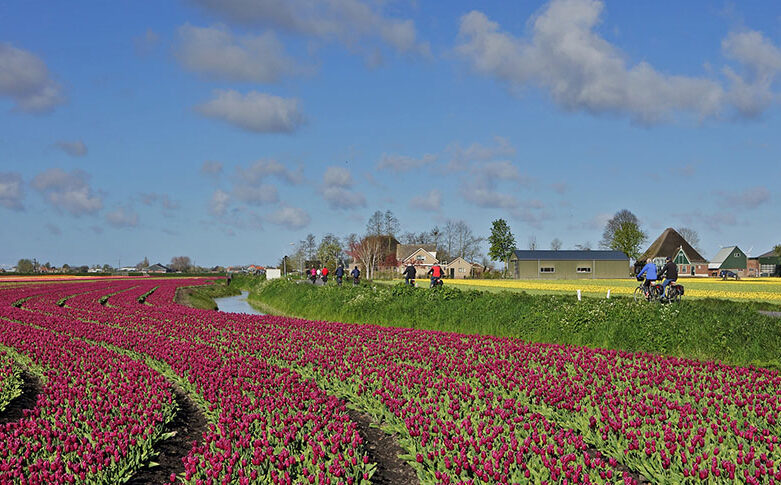 West Friesland by bicycle