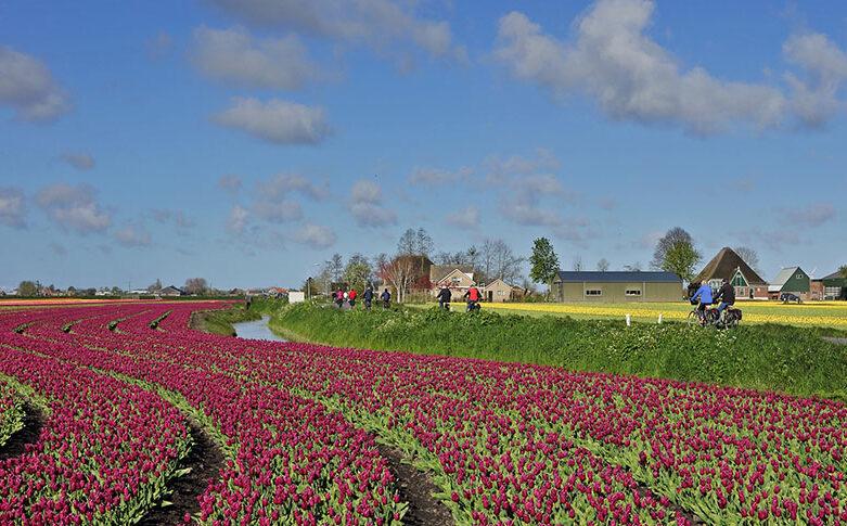 Fietsen door West Friesland